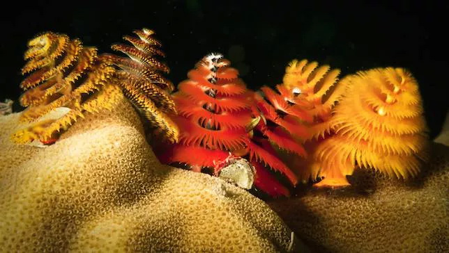 __opt__aboutcom__coeus__resources__content_migration__mnn__images__2014__12__xmas-tree-worms-4176bd1508c44ceeade5faf4bde32166